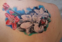 Flowers and ladybug by scottytat